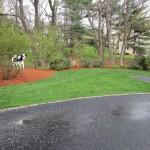 Side yard mulched