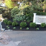 All mulched around plantings