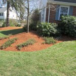 Front yard nicely mulched with Hemlock