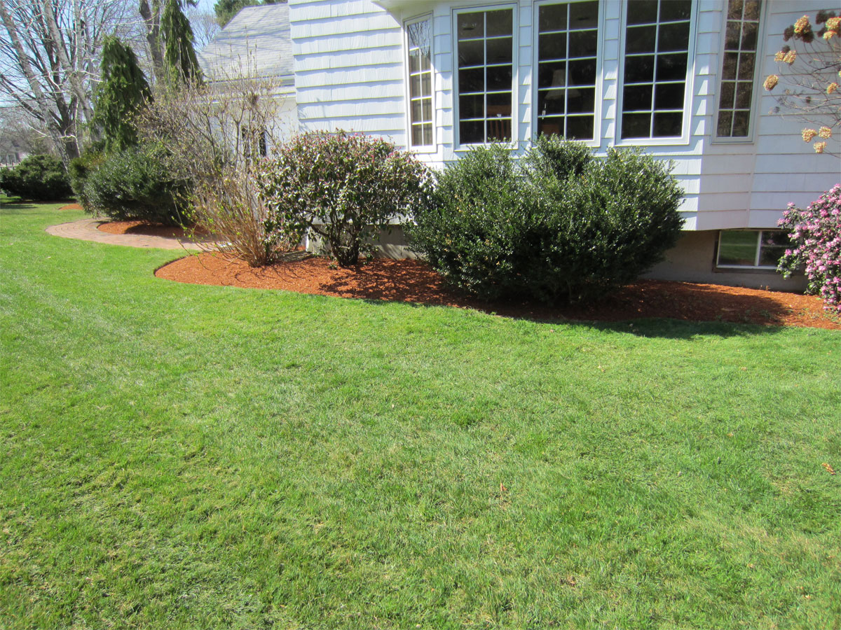 yard clean up picture 3 landscape and waterproofing contractors