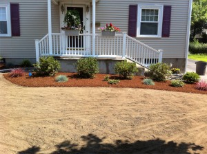Bed created with plantings before Hydroseed